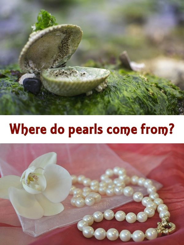 How Pearls Are Made. The surface quality associated with a pearl carries an immediate effect on its value. Not many pearls are totally blemish-free. #pearls